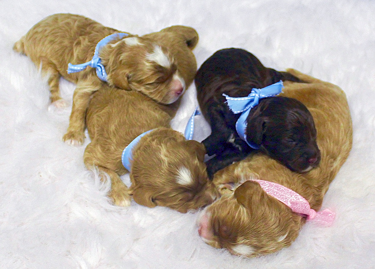Saylor and Briggs Litter